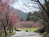 2014武陵櫻花篇:2014 053.jpg