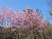 武陵農場--2011櫻花篇:武陵農場--櫻花篇 026.jpg