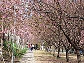 武陵農場--2011櫻花篇:武陵農場--櫻花篇 040.jpg