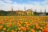 大溪韭菜花:DSC_6272-1.jpg