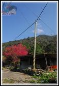 斯可巴部落‧櫻花:20120202_櫻花_斯可巴部落 (27).JPG