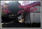 谷關七雄‧唐麻丹山:20120212_唐麻丹山 (21).JPG