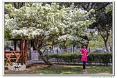201904桃園大湖紀念公園:_MG_1313.jpg