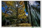 武陵農場-銀杏篇10311:_MG_7071.jpg