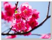 202102走春賞花:20210216_0095.jpg