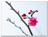 202102走春賞花:20210216_0042.jpg
