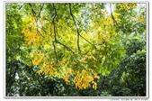 天涼好個秋。新莊運動公園10610:_S001756.jpg