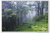 201906阿里山森林遊樂區:_MG_3712.jpg
