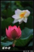 荷花-植物園:IMG_7916.jpg