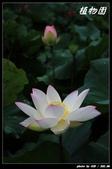 荷花-植物園:IMG_7907.jpg