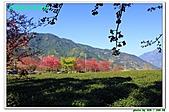 新春南投賞櫻行:IMG_2639.JPG