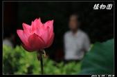 荷花-植物園:IMG_7946.jpg