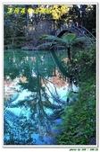 溪頭森林遊樂區:IMG_0459.JPG