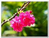 202102走春賞花:20210216_0083.jpg