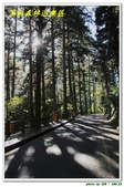 溪頭森林遊樂區:IMG_0473.JPG