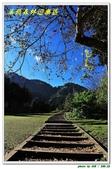 溪頭森林遊樂區:IMG_0477.JPG