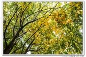 天涼好個秋。新莊運動公園10610:_S001809.jpg