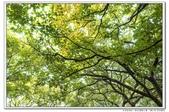 天涼好個秋。新莊運動公園10610:_S001815.jpg