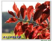 南元花園休閒農場:IMG_9601.JPG