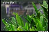 鯉里潭掠影:IMG_9368.jpg