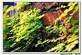 三峽老街習拍:紅磚森林.JPG