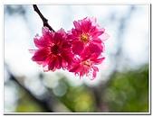202102走春賞花:20210216_0061.jpg