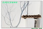 鹿港桂花巷藝術村:IMG_2584.JPG
