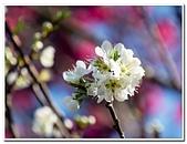 202102走春賞花:20210215_0122.jpg