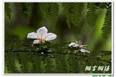 桐言桐語-土城:IMG_0554.jpg