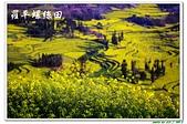 10302雲南旅拍day3-羅平牛街螺絲田:IMG_3861.jpg