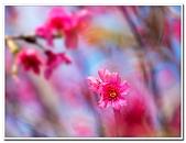 202102走春賞花:20210216_0001.jpg