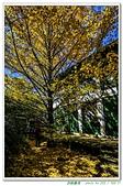 武陵農場-銀杏篇10311:_MG_6931.jpg