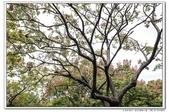 天涼好個秋。新莊運動公園10610:_S001813.jpg
