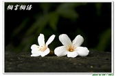 桐言桐語-土城:IMG_0569.jpg