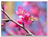 202102走春賞花:20210216_0077.jpg