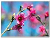202102走春賞花:20210216_0002.jpg