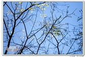 台北植物園隨拍10703:_MG_1263.jpg
