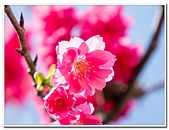 202102走春賞花:20210216_0089.jpg