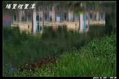鯉里潭掠影:IMG_9396.jpg