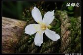 宜蘭油桐花:IMG_3787.jpg