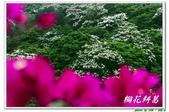 桐花糾葛-承天禪寺:IMG_0653.jpg
