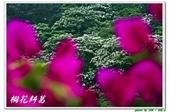 桐花糾葛-承天禪寺:IMG_0659.jpg