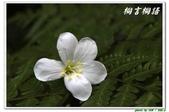桐言桐語-土城:IMG_0500.jpg