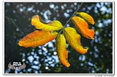 台北植物園隨拍10703:_MG_1293.jpg