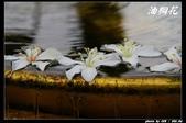 宜蘭油桐花:IMG_3739.jpg