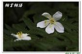 桐言桐語-土城:IMG_0507.jpg