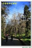 溪頭森林遊樂區:IMG_0492.JPG