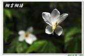 桐言桐語-土城:IMG_0586.jpg
