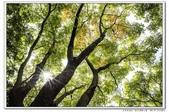 天涼好個秋。新莊運動公園10610:_S001823.jpg