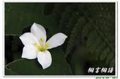 桐言桐語-土城:IMG_0627.jpg